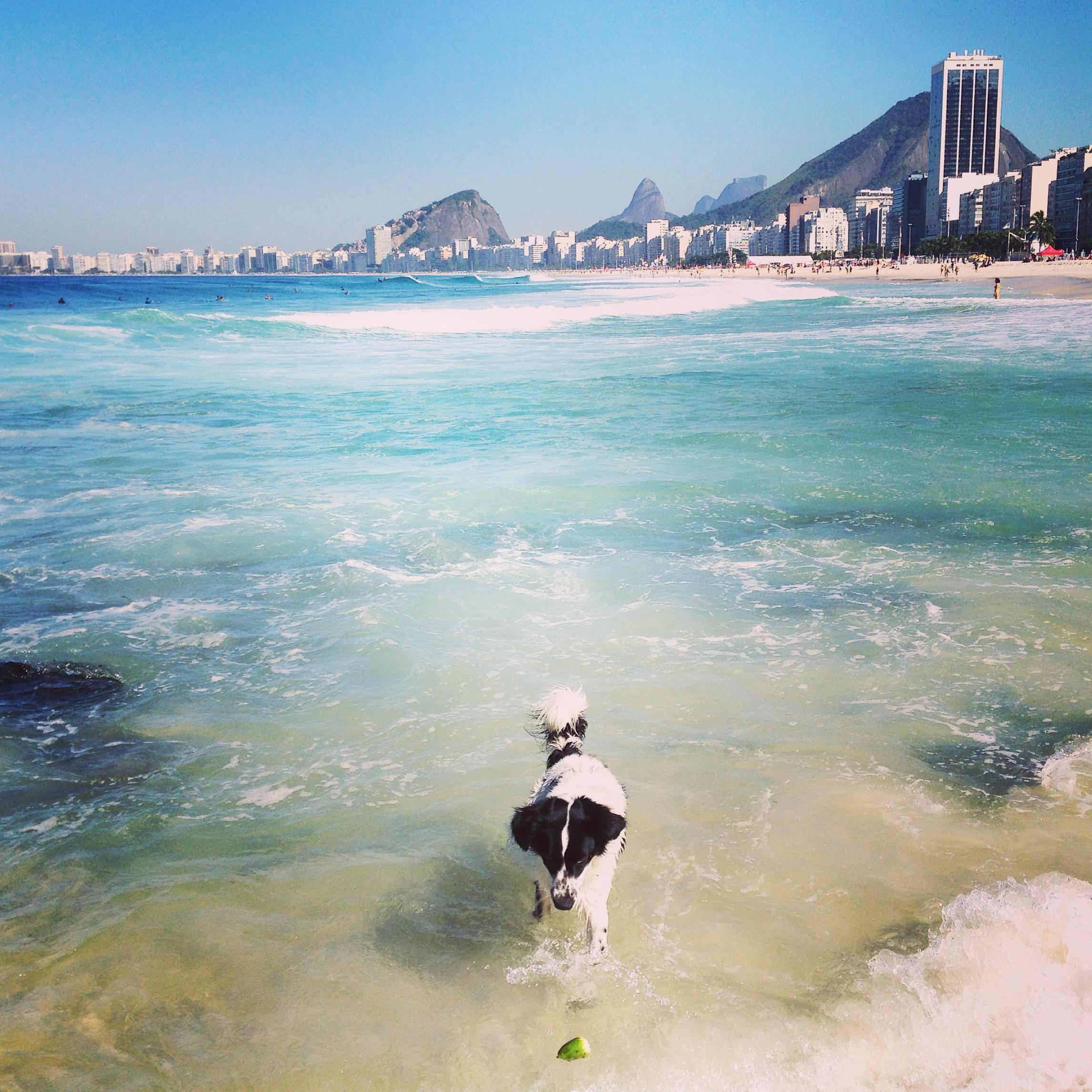 cachorro na praia_TalitaChaves